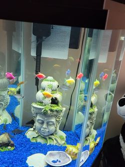 Fish Tank +stand+fishes +water Testing Kit And All The Accessories for Sale in Brooklyn,  NY