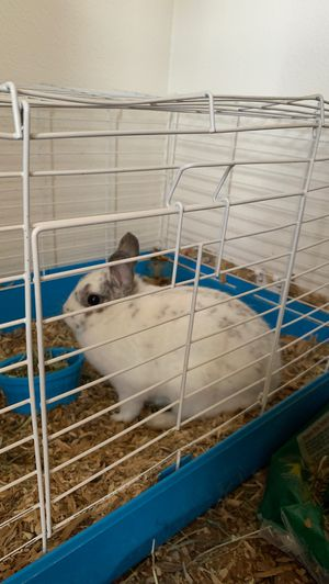 1 year old female bunny for Sale in Vancouver, WA