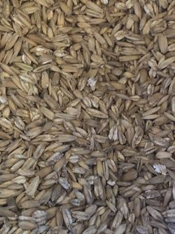 Rolled Oats 15LBS for Sale in Buena Park,  CA