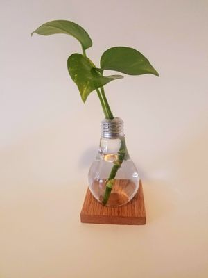 Light bulb plant vase for Sale in Chicago, IL