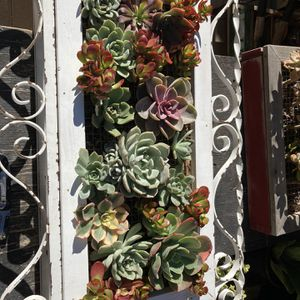Succulent Iron And Wood Wall Box for Sale in San Juan Capistrano, CA