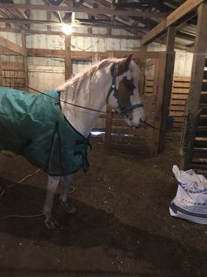 Horse blanket for Sale in Westgate, NY