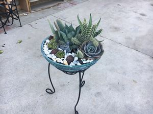 Big Rustic arregment with spike Maguey Cactus succulent for Sale in Bloomington, CA