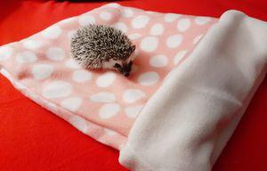Homemade Hedgehog Snuggle Sack. Pink pokedot Design. for Sale in Menifee, CA