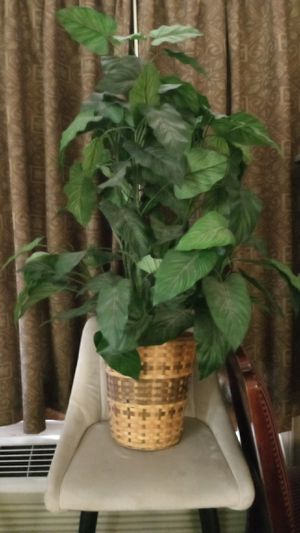 Artificial plants for Sale in Galloway, OH