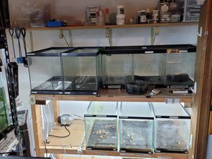 Clean lightly used fish tanks FS for Sale in Frederick, MD