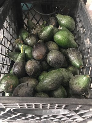 Avocados 2 for $1 Organic/ homegrown for Sale in Fullerton, CA