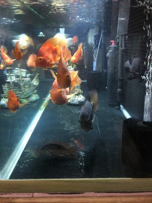 125g tank for Sale in Roswell, GA