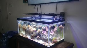 40 gallon aquarium for Sale in Crestline, CA