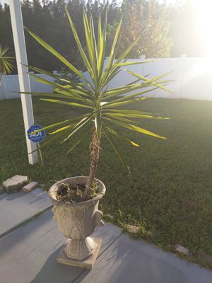 Plant and pot for Sale in Land O Lakes, FL