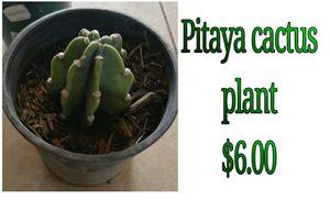 Pitaya cactus plant for Sale in Hacienda Heights, CA