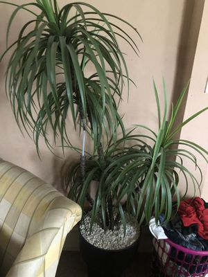 Fake plant for Sale in Columbus, OH