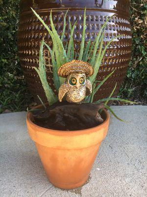 Succulents for Sale in Fullerton, CA