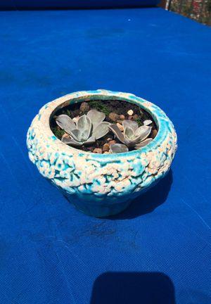 Blue succulent terrarium for Sale in Grapevine, TX
