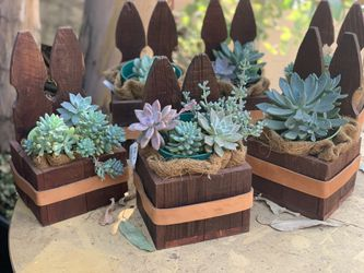 Succulent arrangement in wooden and leather box or glass container for Sale in Hayward,  CA