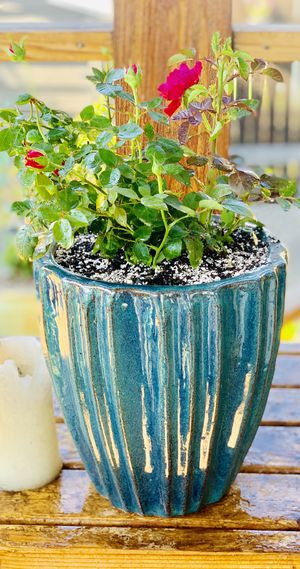 Live outdoor rose bush plant in a textured ceramic planter flower pot—firm price for Sale in Seattle, WA