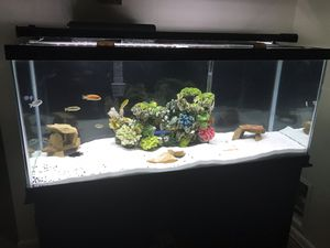 75 gallon fish tank. for Sale in Bowie, MD