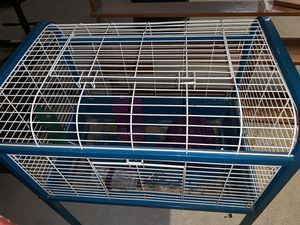 Used standup Guinea pig cage with accessories for Sale in Unadilla, NY