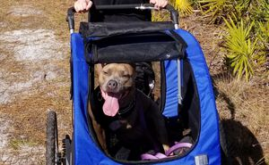 Dog Stroller and Bike Trailer COMBO for Sale in Orlando, FL