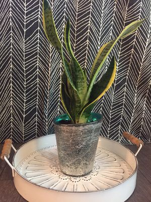 Live Indoor Snake Plant in Turquoise Planter Pot for Sale in Phoenix, AZ