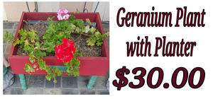 Geranium plant for Sale in Hacienda Heights, CA