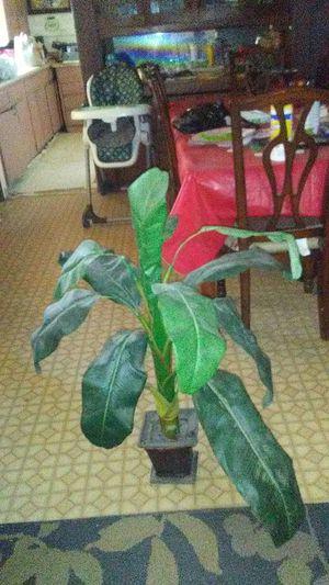 Plant for Sale in Kerman, CA