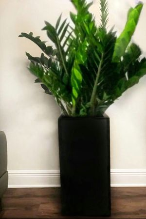 Home Decor Real ZZ Plant with wooden flower vase for living room dining room bedroom and office for Sale in Miami, FL