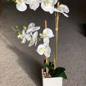 Orchid Flower Vase for Sale in Berwyn, PA