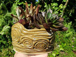 Succulents in ceramic planter for Sale in Las Vegas, NV