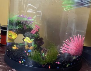 3.5 Top fish Tank with Betta Female And African Dwarf Frog for Sale in Los Angeles,  CA