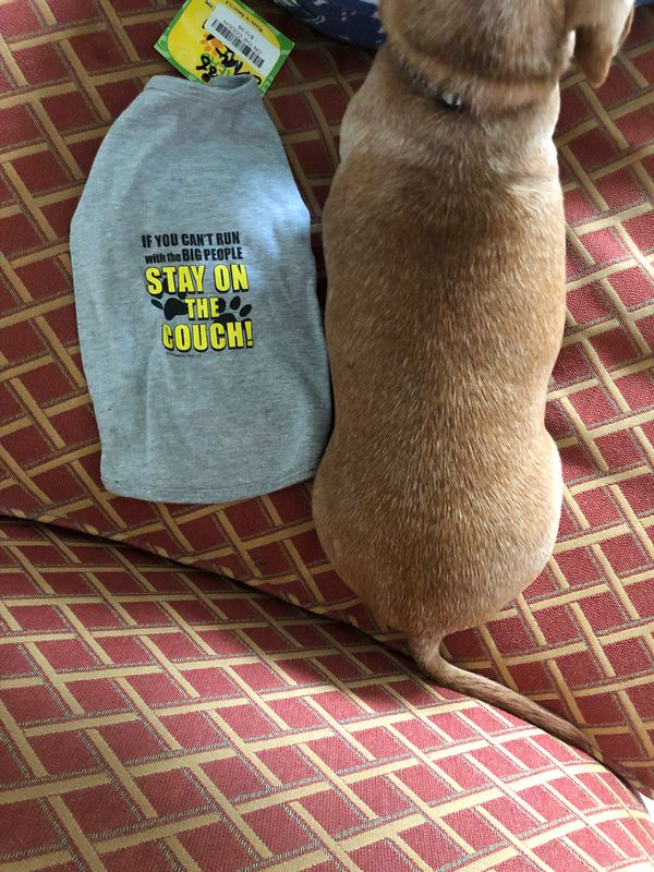Medium Dog Shirt On The Couch