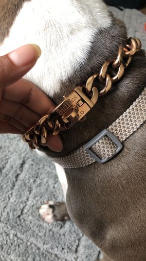 Bullies & Co 16 Inch Collar for Sale in Gainesville, VA