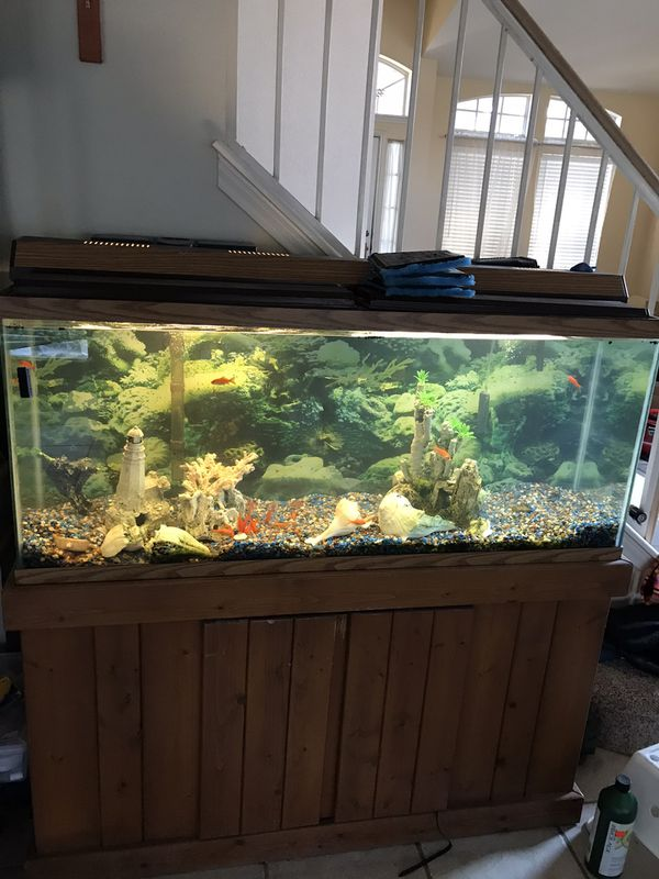 Aquarium 75 gallon big filter lights all decorative item with it