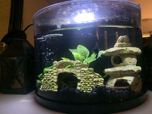 Betta Tank. 2.5 gallons with lots of extras for Sale in Vancouver, WA