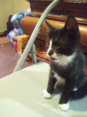 Kittens for sale for Sale in Philadelphia, PA