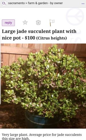 Large Jade succulent plant for Sale in Citrus Heights, CA