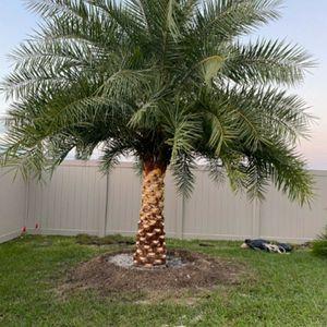 Silvestre for Sale in Cape Coral, FL