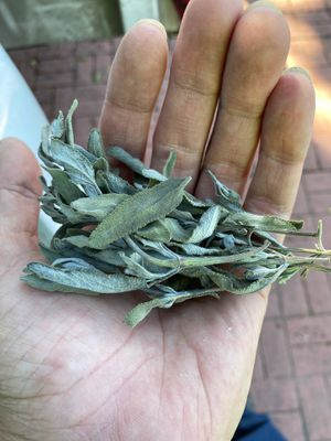 Small bundle of cut and dried sage for Sale in Baldwin Park, CA