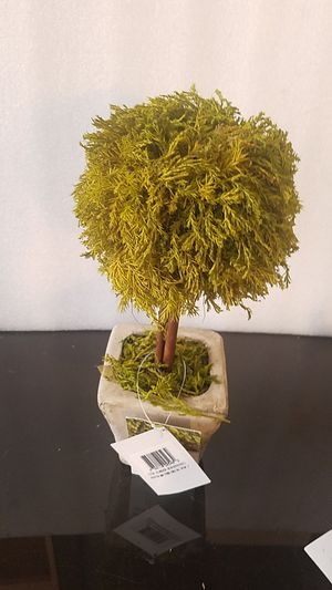 "Lemon Cypress Topiary 12"" for Sale in Covina, CA"