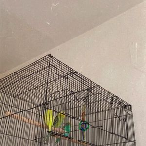 Birds Cage, Small And Black With Dividers for Sale in Brooklyn, NY