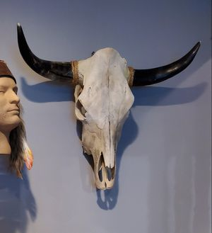 Large cow skull with polished horns, Excellent condition ready to mount for Sale in La Mirada, CA
