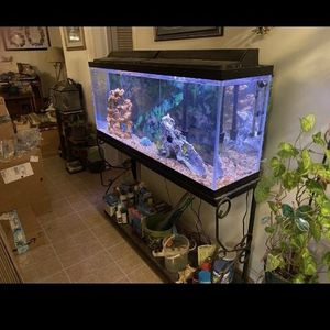 Fish Tank 55' Gallon With Metal Stand for Sale in Falls Church, VA
