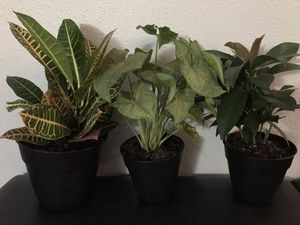 House plants for Sale in Gresham, OR