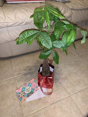 Money tree gift for Sale in El Paso, TX