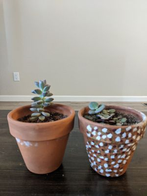 Young succulents for Sale in Westminster, CO
