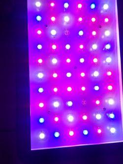 Viaspectra Grow Light for Sale in Miami,  FL