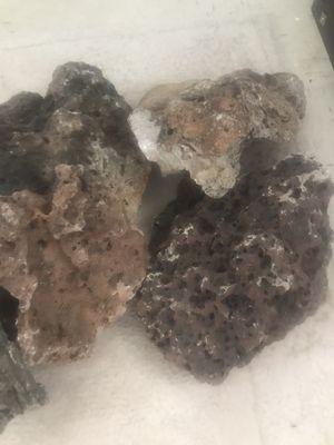 Aquarium Lace Rock 75+ pounds for Sale in Columbus, OH