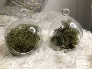 Hanging Airplant / succulents glass pots comes with moss and rocks for Sale in Queens, NY