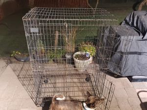 Large Collapsible Bird Cage for Sale in Seattle, WA