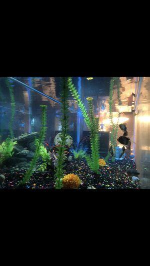 FishTank for Sale in Fresno, CA
